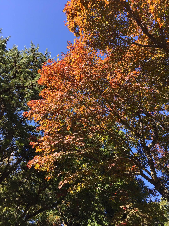 Atlanta Botanical Garden Fall Festival